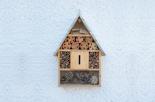 img_bug_house_online.jpg